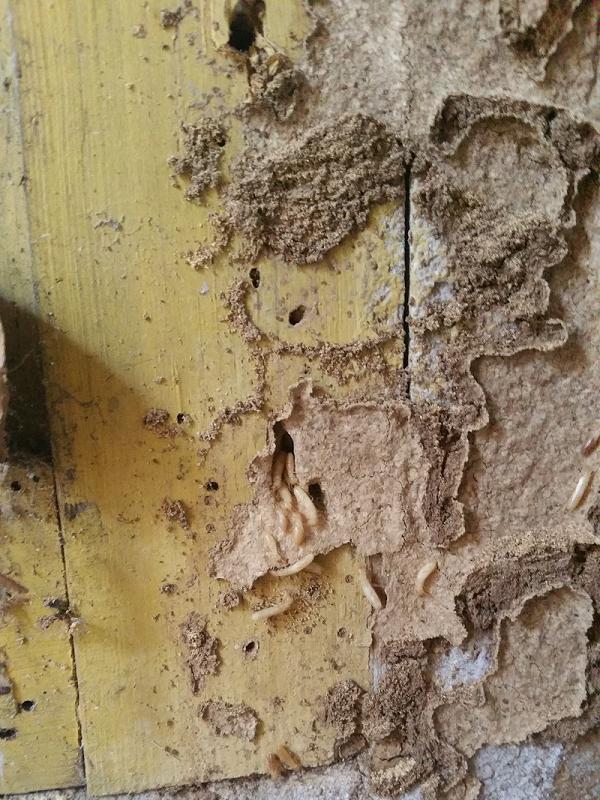 Attaque termites