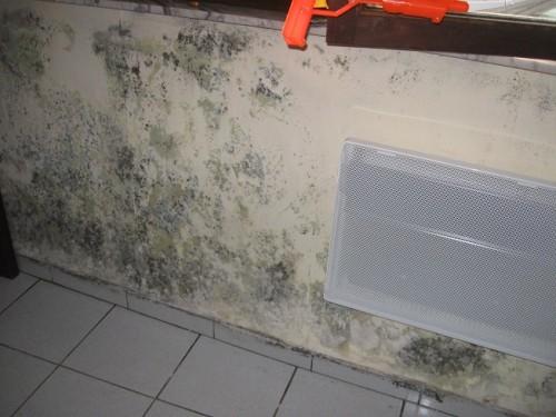 condensation des murs